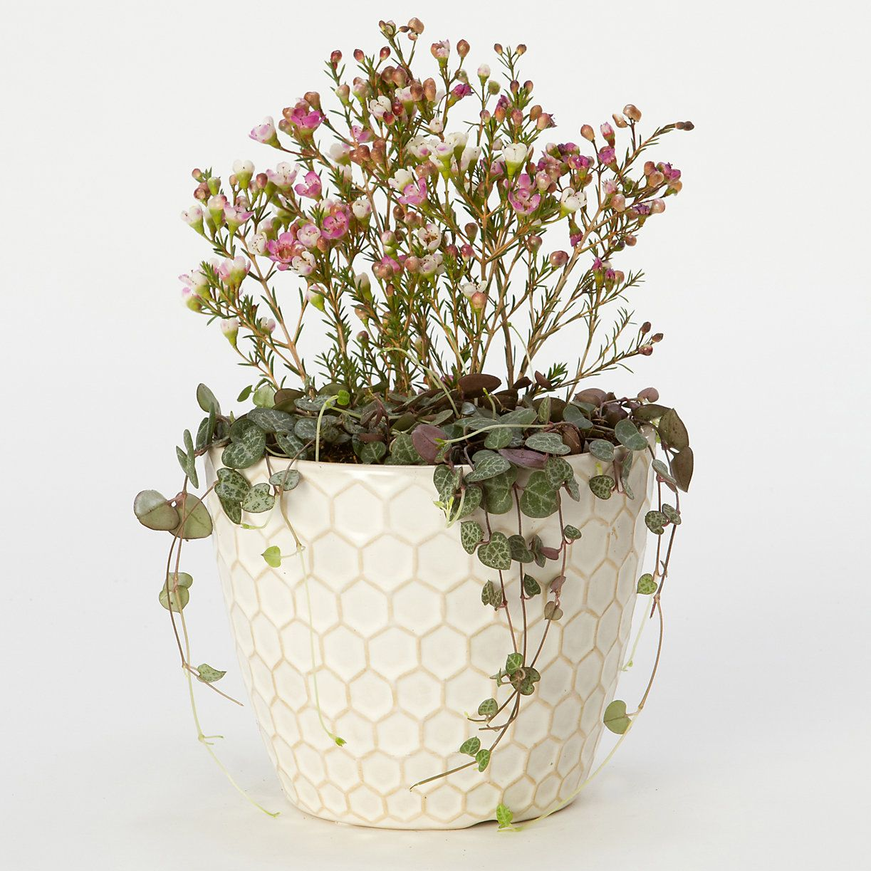 Planter Lys En Pot Honeycomb Pot Container Designs And Plant Ideas Garden