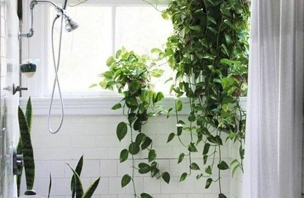 Badezimmer Pflanzen ~ Welche zimmerpflanzen brauchen wenig licht efeutute