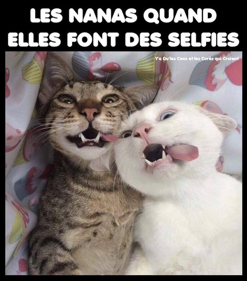 Les Nanas Quand Elles Font Des Selfies Blague Drole Drole Humour Mdr Lol Vdm Rire Rigolo Rigolade Rigole Rigole Chat Drole Drole Blague Animaux