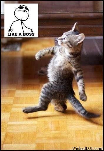 Like A Boss Animail Funny Cats Funny Animal Pictures