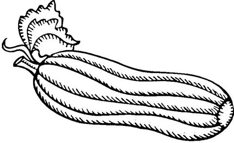 Green Zucchini Coloring Page From Squash Category Select From 26396 Printable Crafts Of Cartoons Coloring Pages Green Zucchini Free Printable Coloring Pages