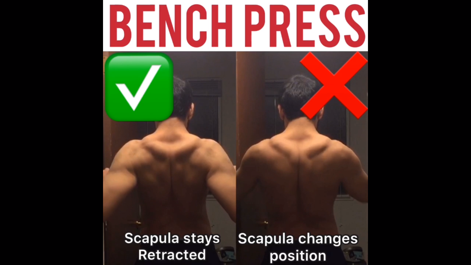 How To Bench Press Properly For Beginners Underdog Strength Training Video Video Bench Press Deadlift Chest Muscles