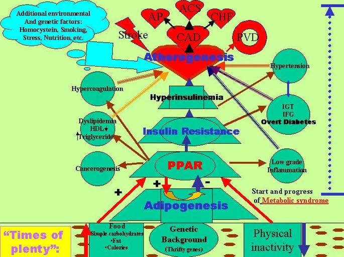 Metabolic syndrome and type 2 diabetes mellitus focus on