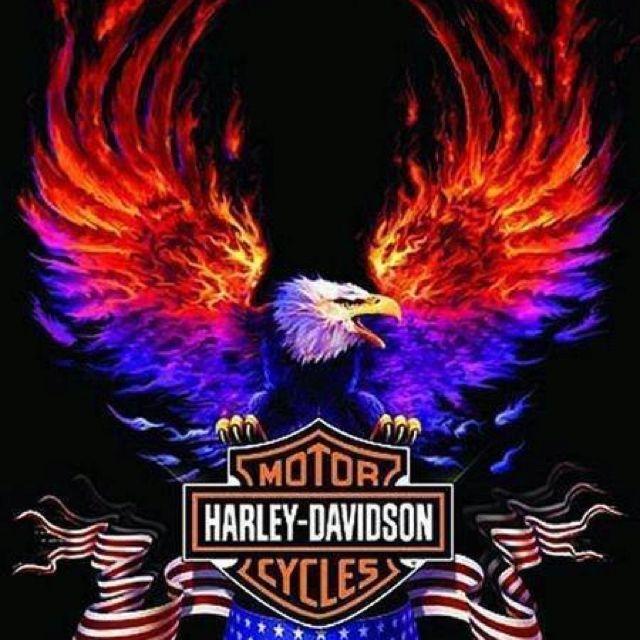 Fire Eagle Harley Shield Harley Davidson Wallpaper Harley Davidson Posters Harley Davidson Art