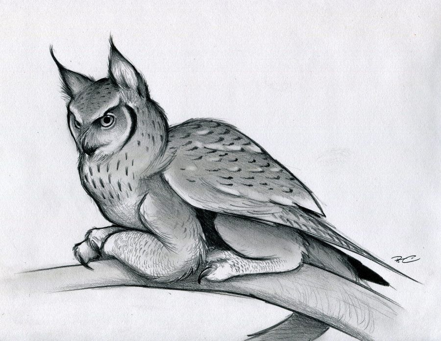 Eagle Owl Griffin By Robthedoodler Deviantart Com On Deviantart