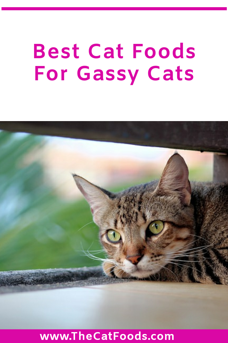 Best Cat Food For Gassy Cats in 2020 Best cat food, Cool