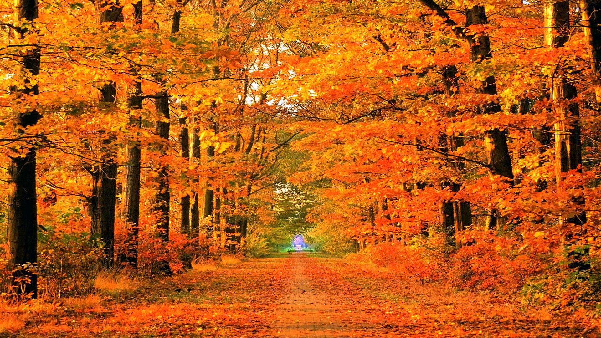 autumn path Soapin'spiration! Pinterest Fall desktop