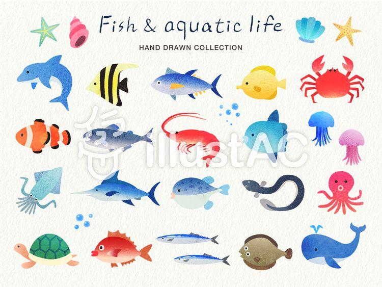 手描き風の魚と水生生物のイラストセットイラスト No 1191315 無料イラストなら イラストac 魚イラスト 手のスケッチ 魚釣り イラスト