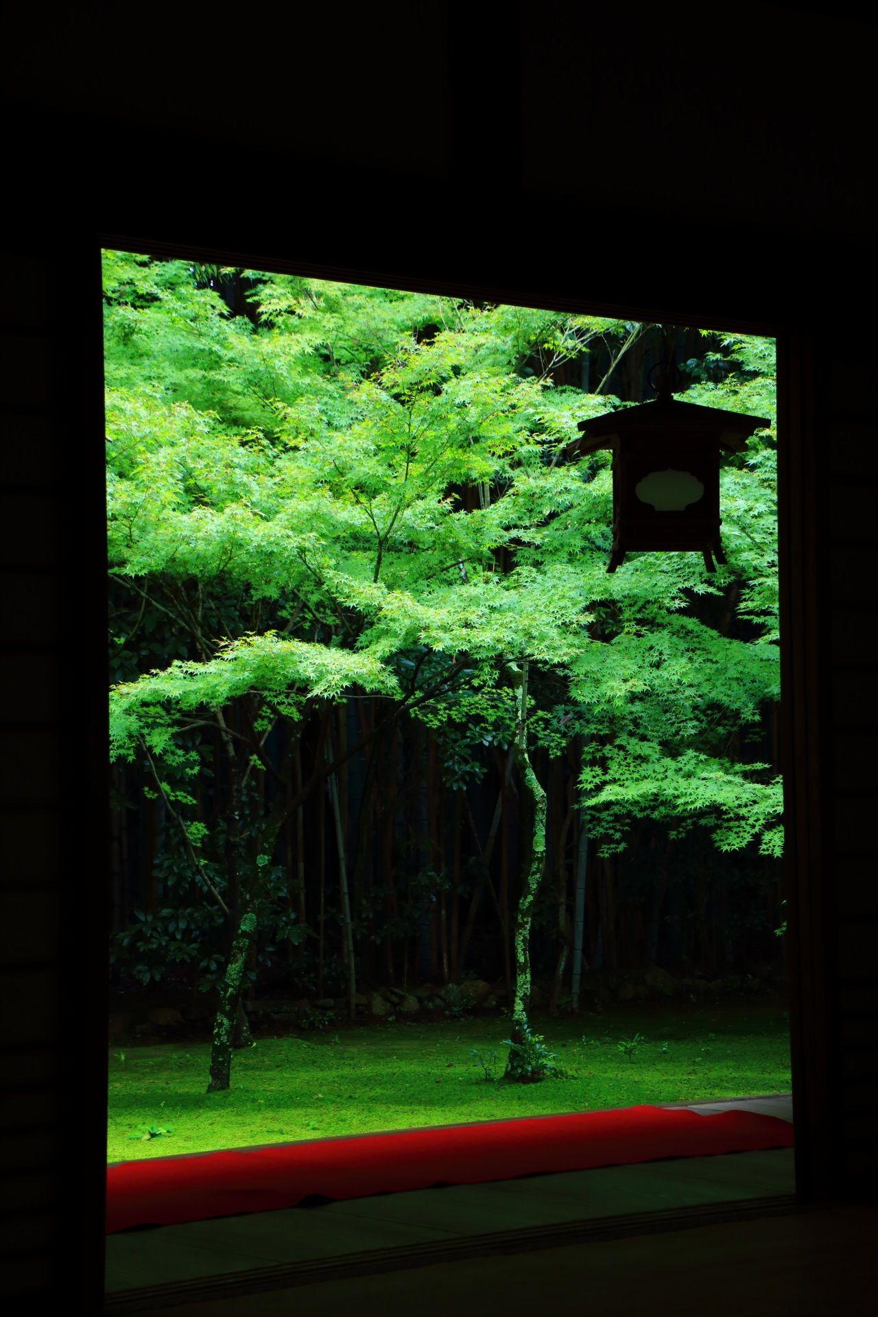高桐院の客殿から眺めた庭園の青もみじと苔