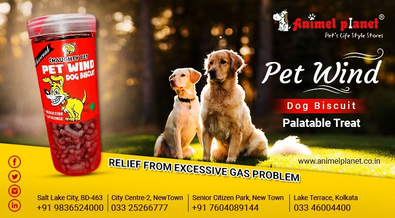 The No1 Pet Products Shop In Darjeeling Animel Planet Pets Pet Life Town Lake