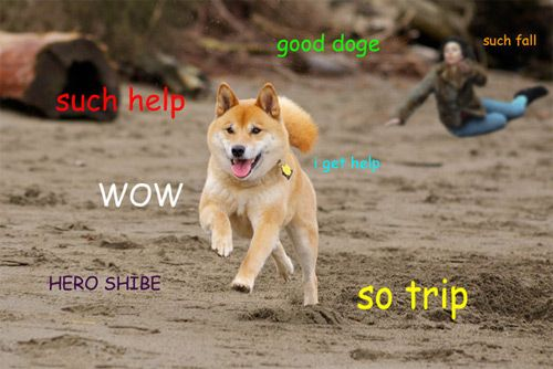 Shibe Doge Roblox Scarlett Johansson Falling Down Is The Best New Meme In Years Dog Facts Shiba Inu Shiba