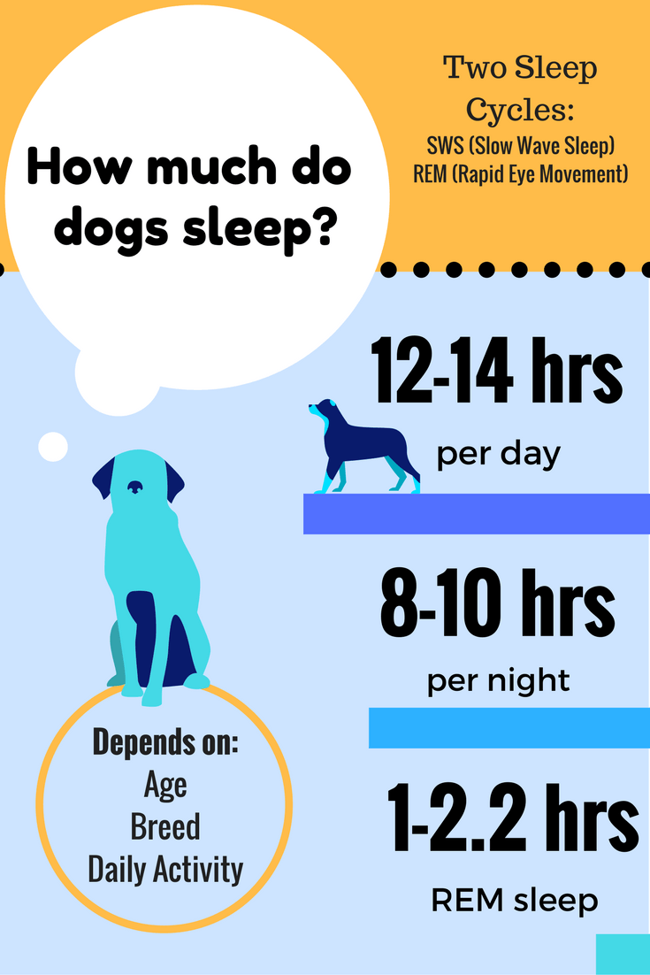 How Much Do Dogs Sleep and How Many Hours Does Fido Really