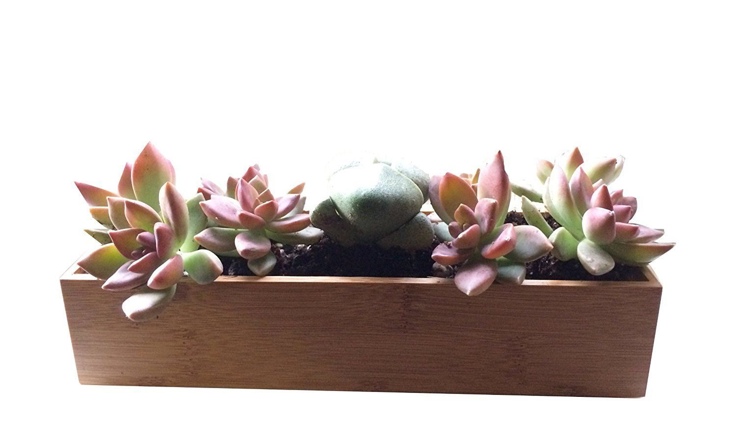 Bamboo Planter For Succulents Mini Wooden Bamboo 400 x 300