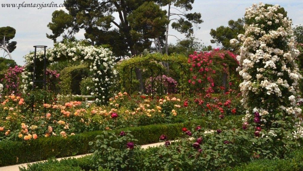 Rosales Trepando Sobre Arcos De Hierro Flores Plantas Y Jardiner A