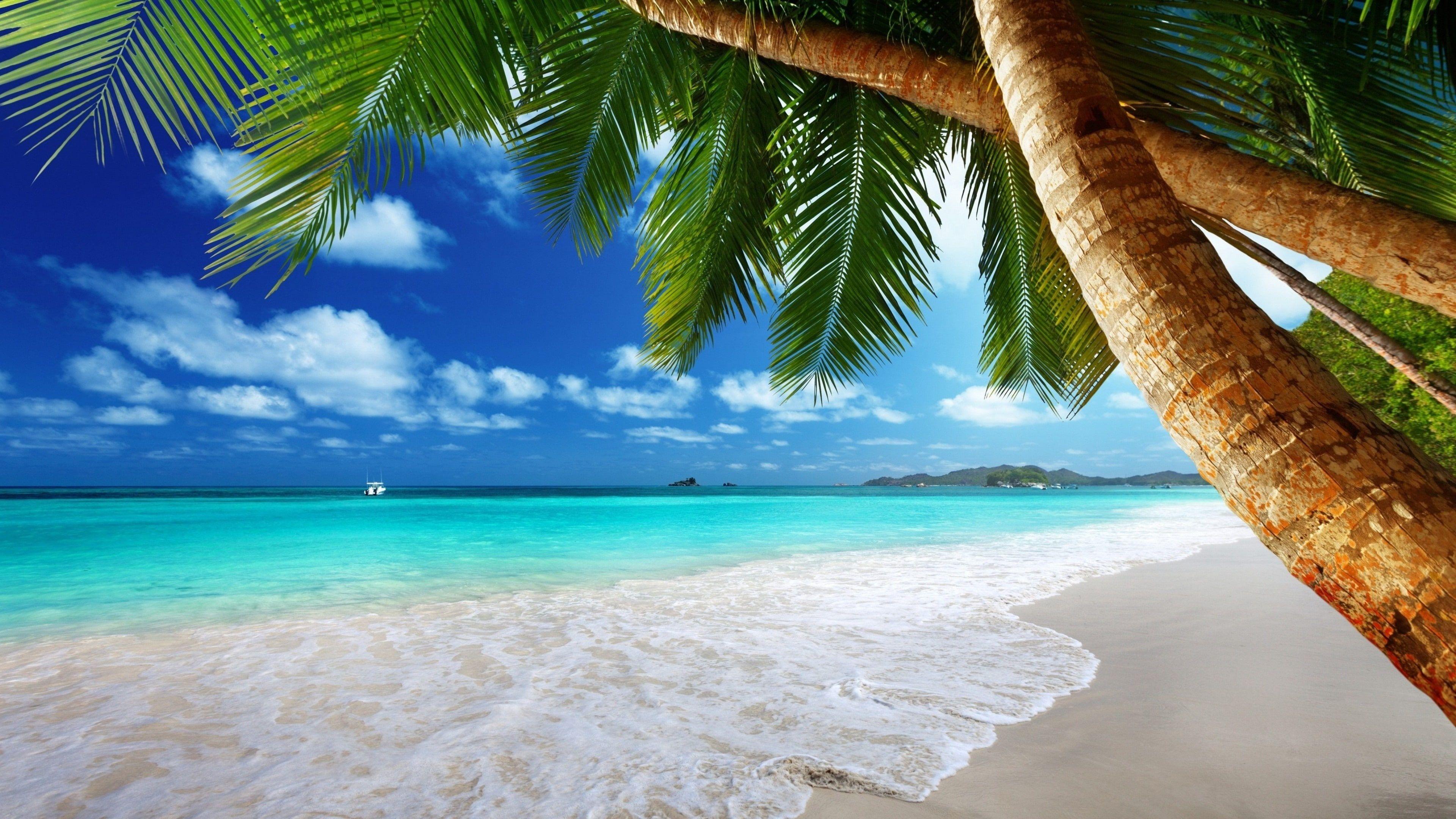 Vacation Summertime Tropical Tropical Landscape Lagoon Tree Water Tropical Beach Beach Sandy Bea In 2020 Nature Beach Tropical Landscaping Tropical Island Beach