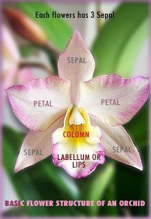 Photo of How to care for an orchid –  How to care for an orchid ,  #Care #Orchid  – #Care…