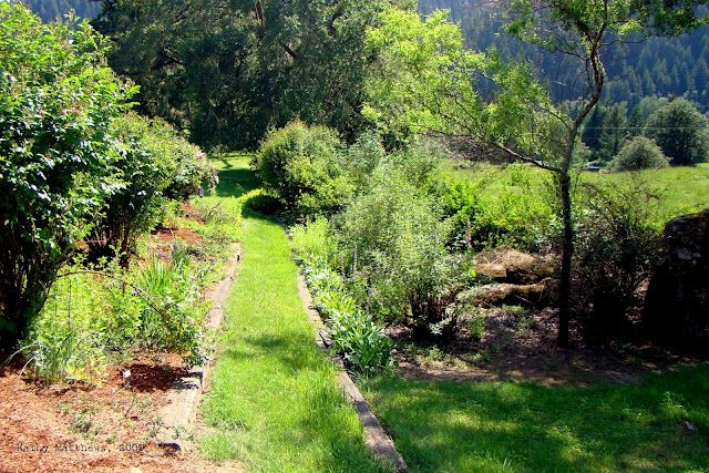 green garden path... Garden inspiration, Green garden