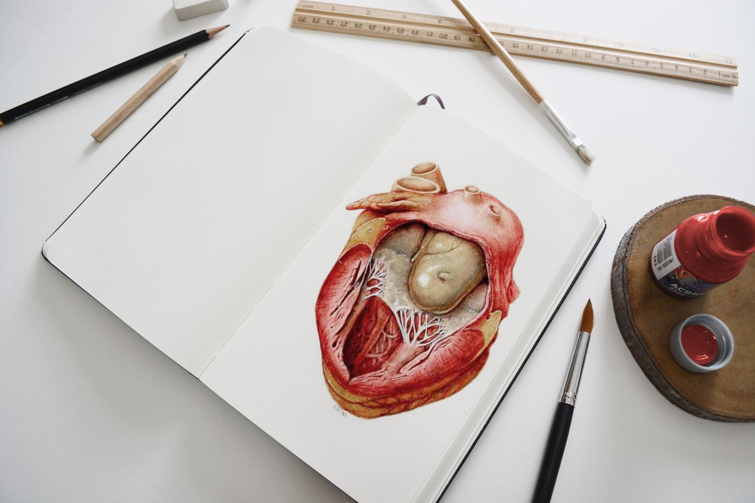 how to become a medical illustrator