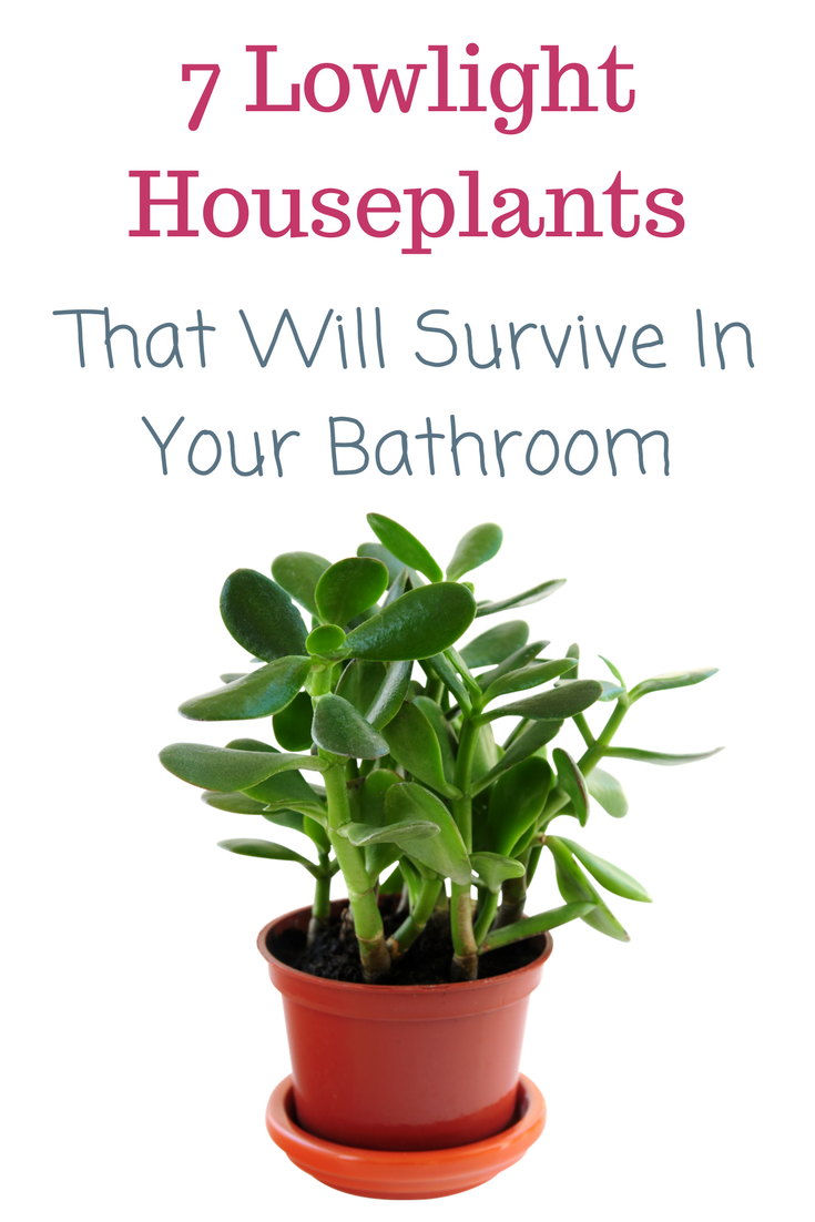 7 Low Light Houseplants That Will Make Your Home Gorgeous ...