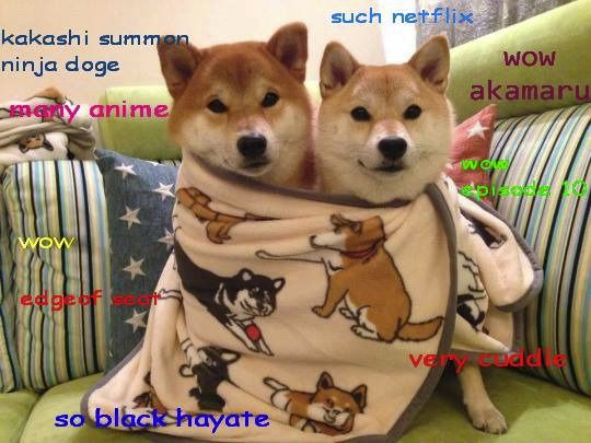 Doge Anime Image Tagged In Doge Made W Imgflip Meme Maker