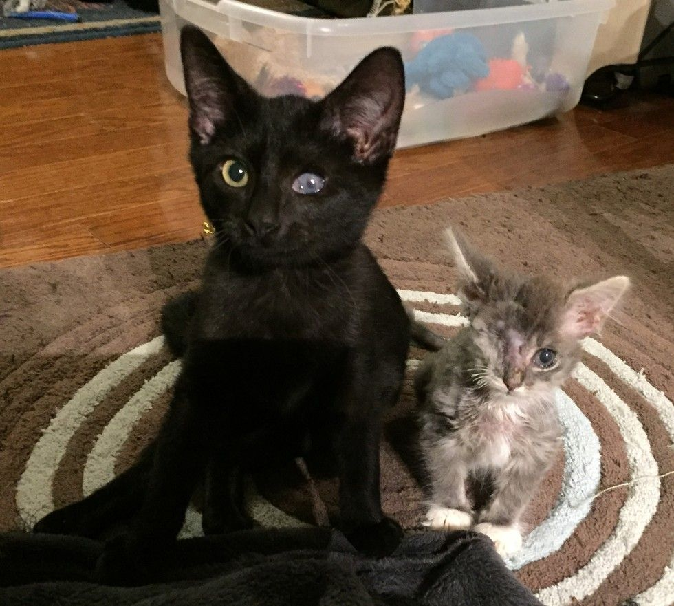 Two Orphaned Kittens Both Disabled Complete Each Other In A Special Way Love Meow Cats Cats And Kittens Kittens
