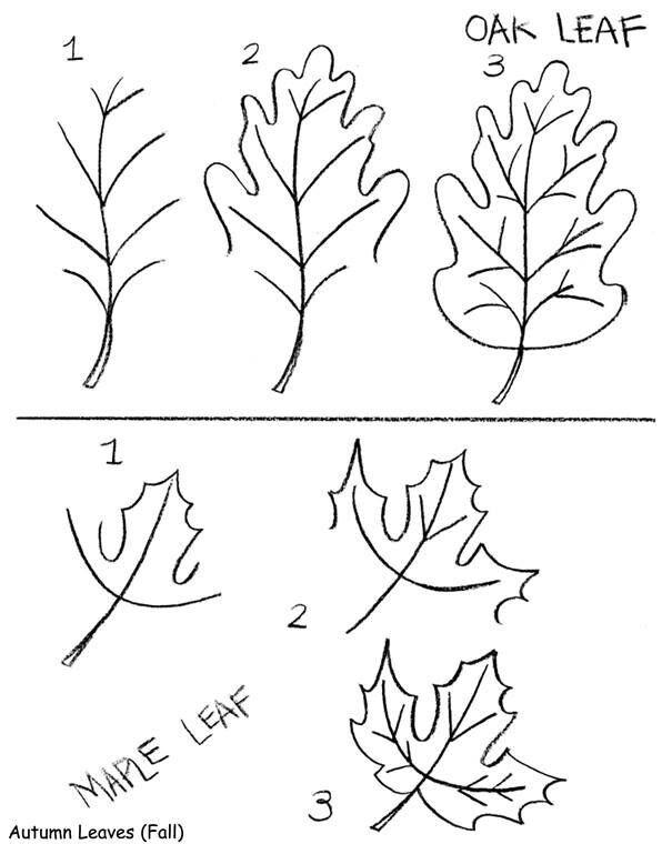Pin By Nirmeen Ipraheem On How To Draw Leaf Drawing Fall Drawings Flower Drawing