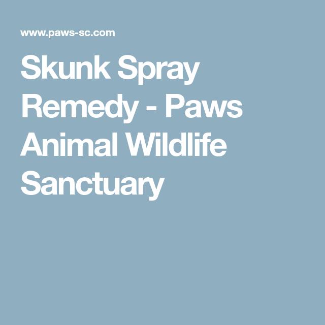 Skunk Spray Remedy Paws Animal Wildlife Sanctuary Skunk Spray Remedy Skunk Spray Wildlife Sanctuary