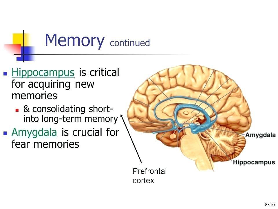 Learning Memory Video Online Download Short Term Memory Brain