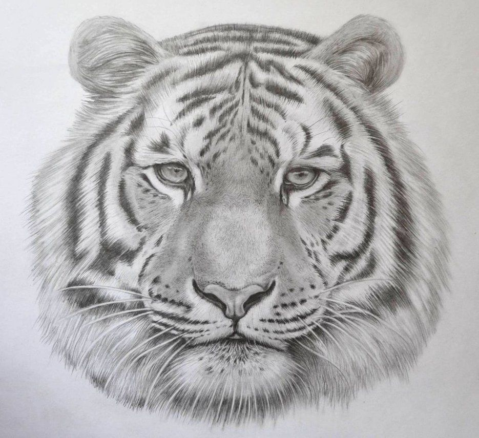 Realistic Tiger Drawing in Pencil by JSHarts on deviantART