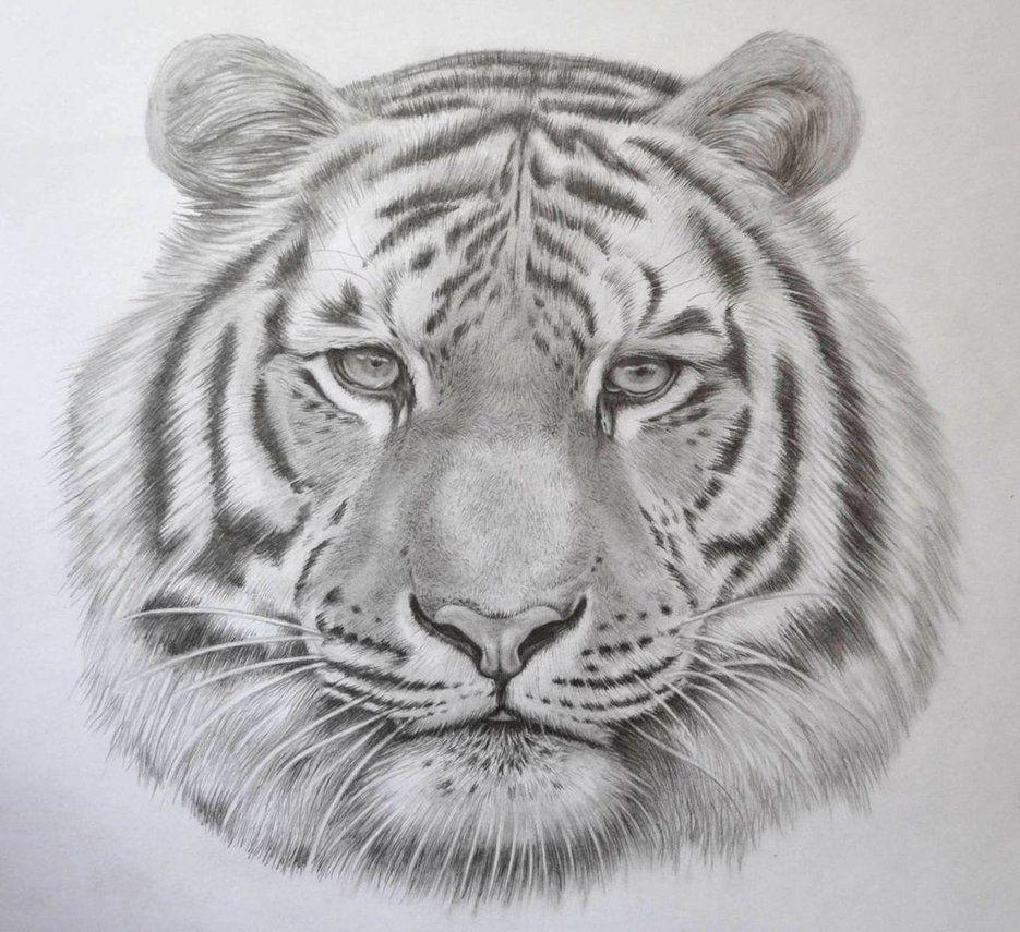 Tiger Pencil Art Drawing