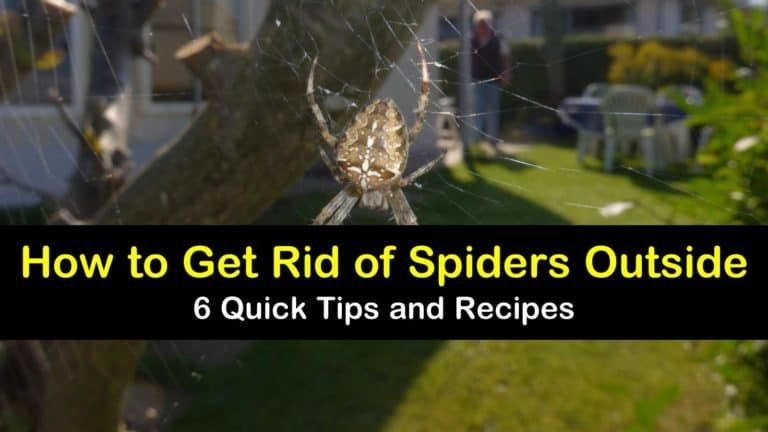 6 brilliant ways to get rid of spiders outside in 2020