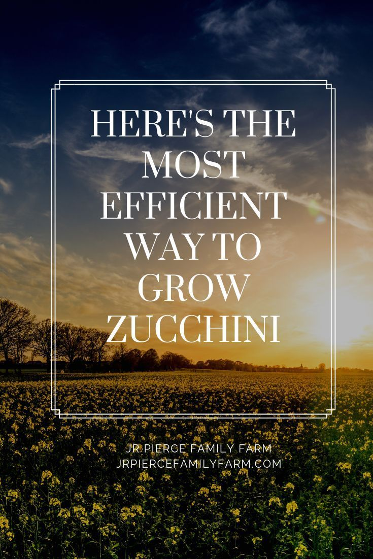 Interested in growing zucchini Learn more about the health benefits culinary uses and of course growing techniques for this delicious plant