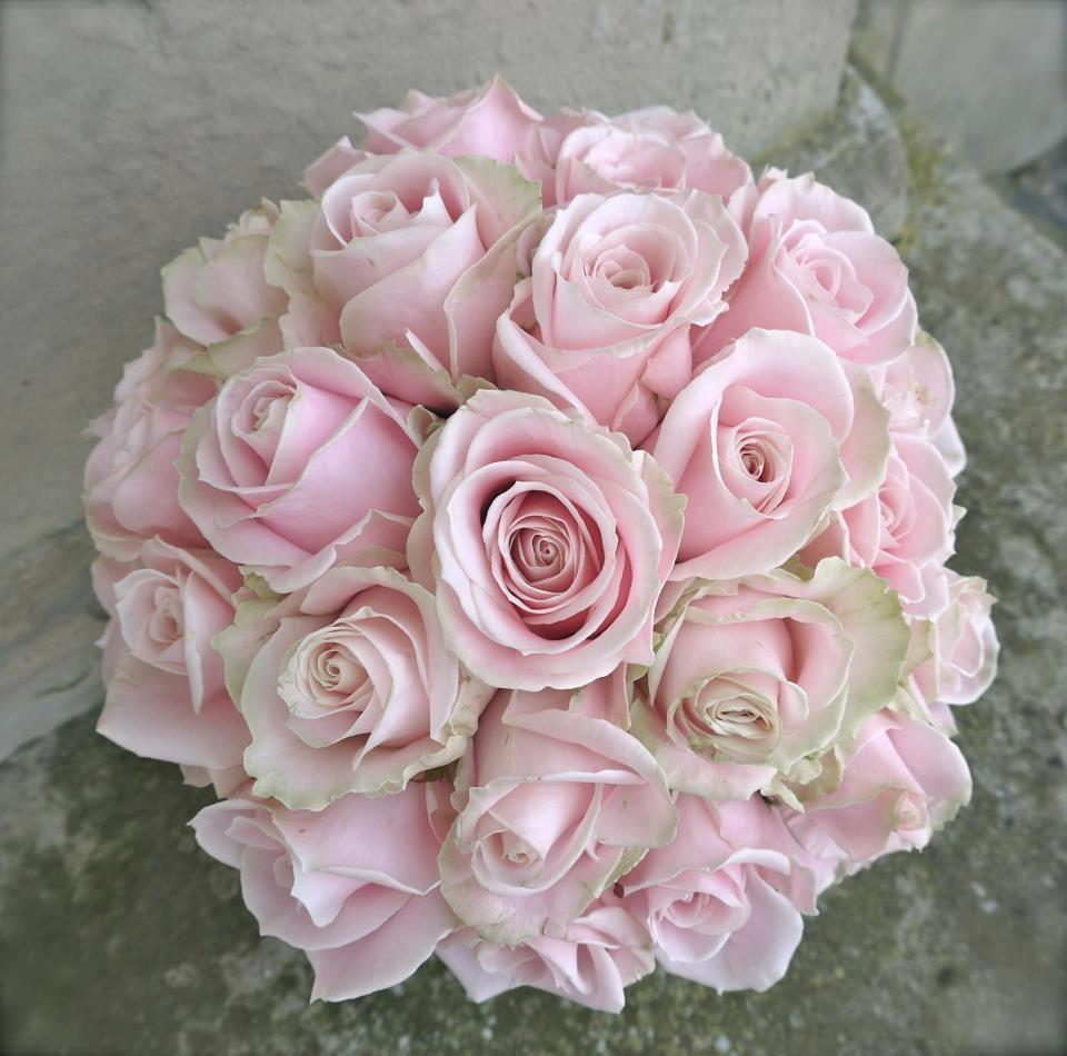 Pink avalanche rose | Sarah & Max | Pinterest