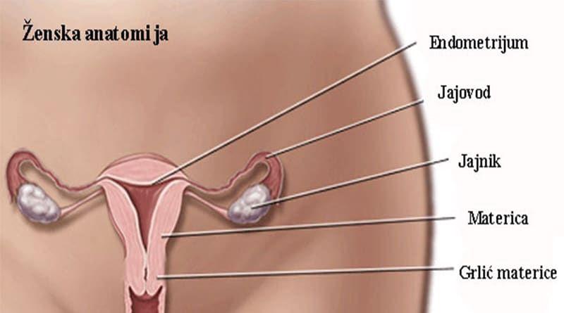 hpv vírus rak grlica maternice