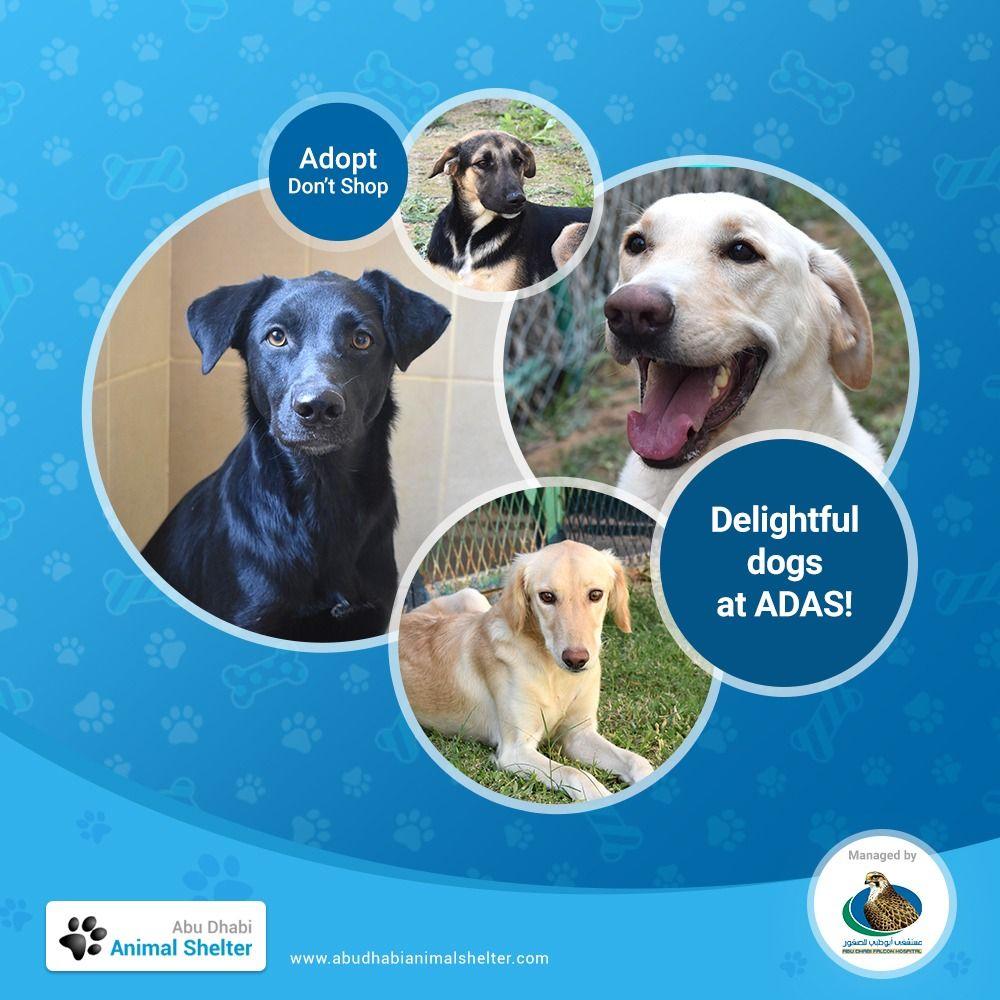Abu Dhabi Animal Shelter In 2020 Animal Shelter Animals Shelter
