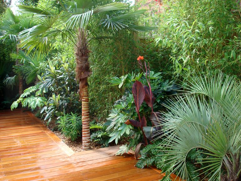 tropical plants in a london garden urban tropics exotic garden design - Garden Design Tropical