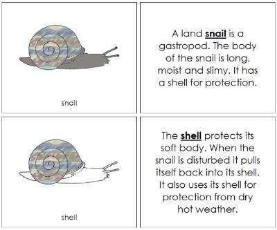 snail nomenclature - book
