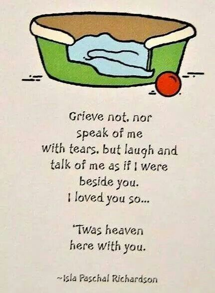 From a dearly loved but departed fur kid.