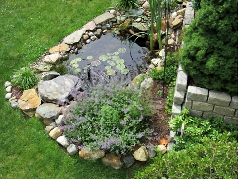 How To Build A Small Pond For Fish? in 2020   Small ponds ...