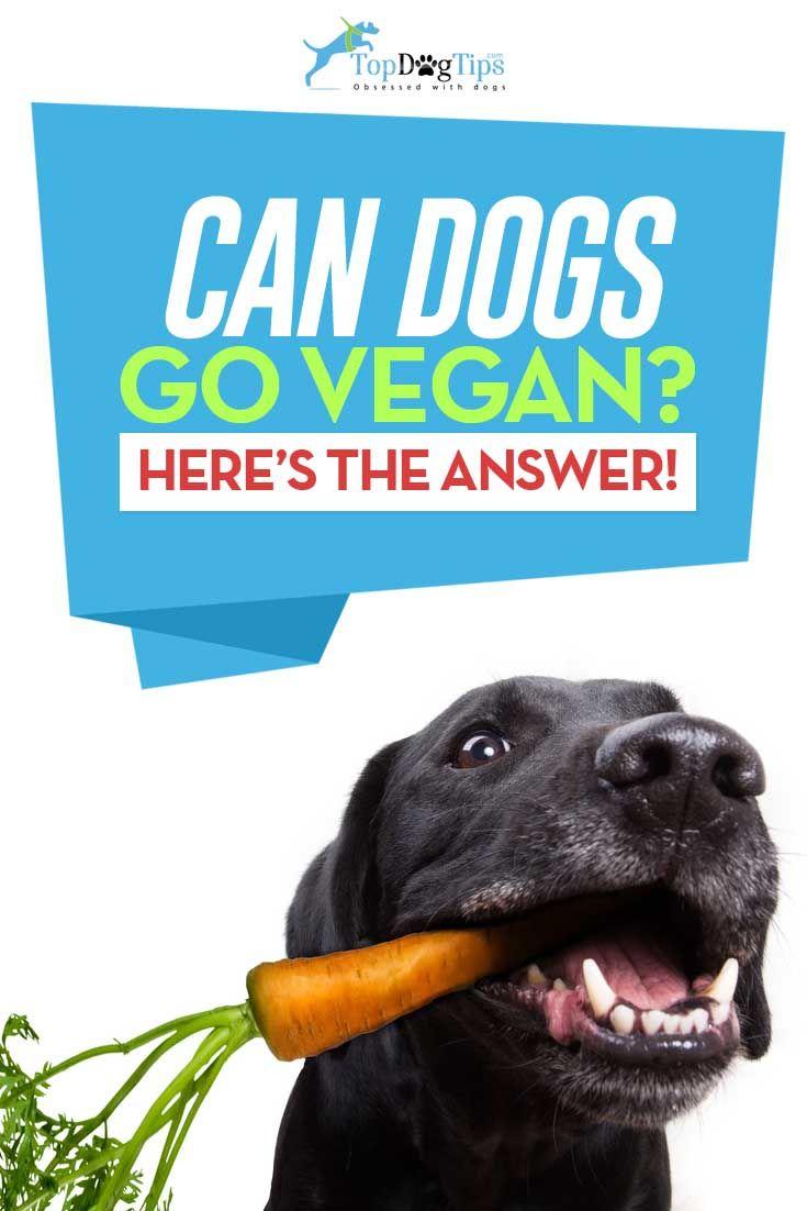 Can Dogs Be Vegans Or Vegetarians Vegetarian Dog Food Recipe
