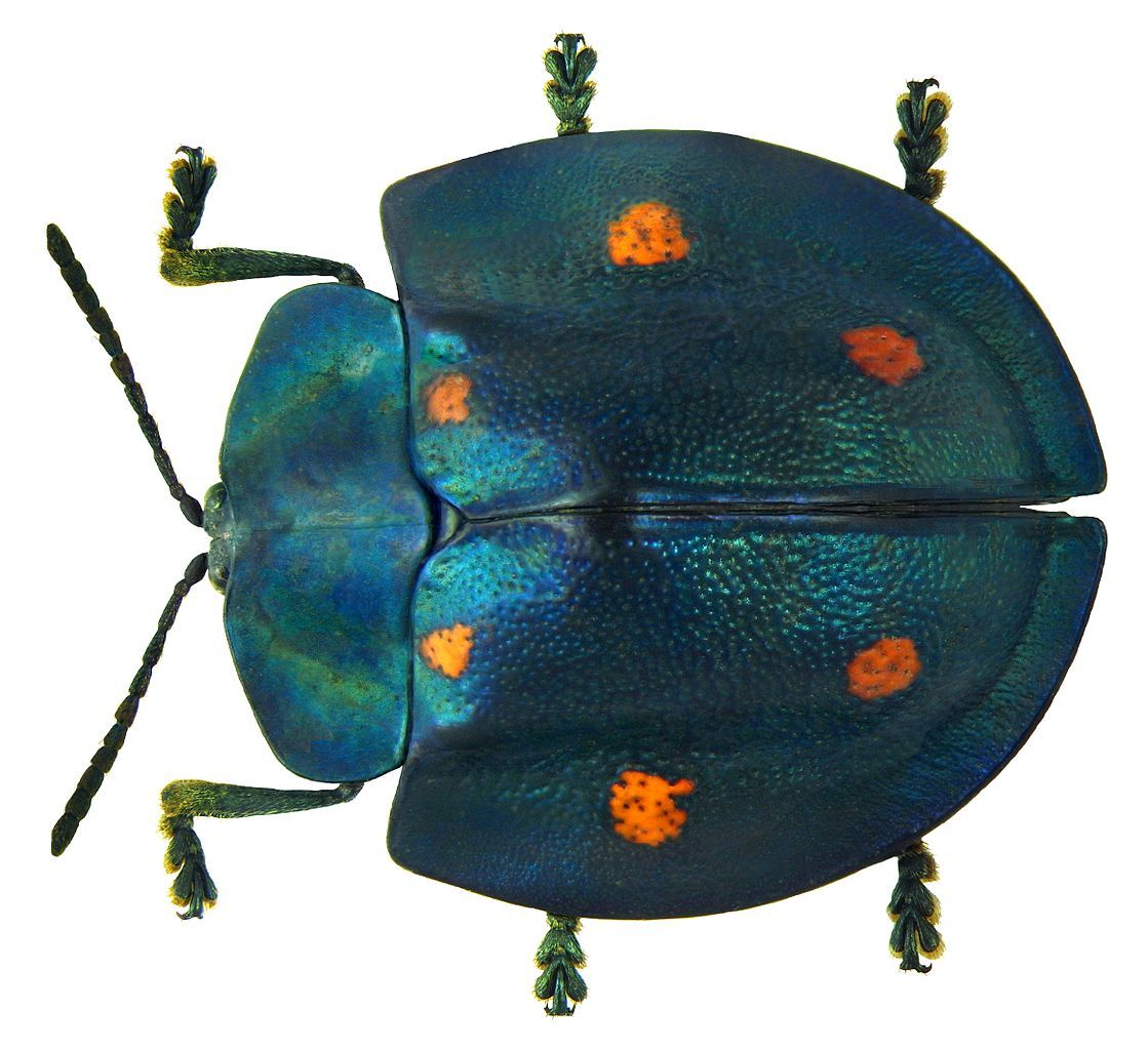 One Hobbyist's Stunning Collection of Beetles From Around the World