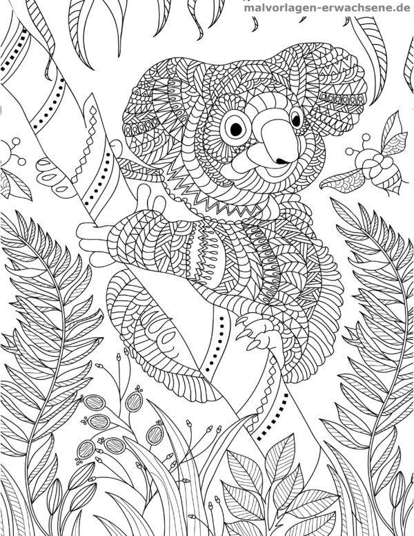 Malvorlage Koala für Erwachsene - Malvorlagen / Ausmalbilder für ...