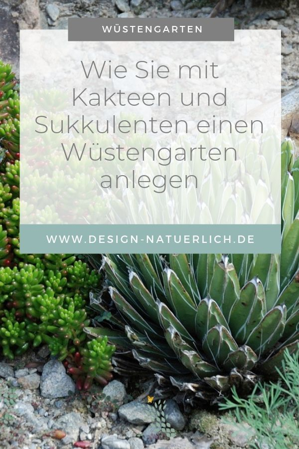 Der Garten im Klimawandel - Wie Du mit winterharten Kakteen und Sukkulenten einen Wüstengarten anlegst - Stilvolles Design – einfach gepflanzt
