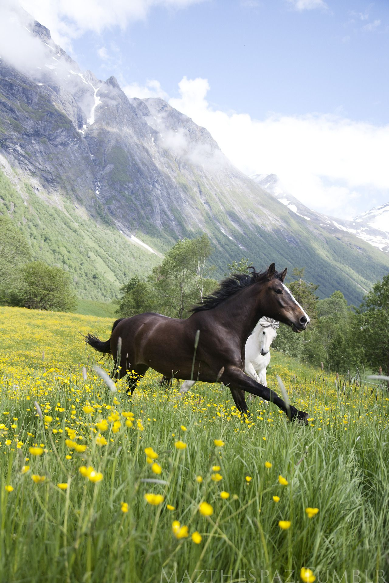 Just Beautiful Horses Heste Grass Flowers Animal