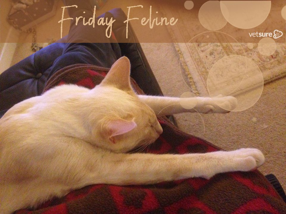 Friday Feeling Feline Cat Insurance Dog Insurance Dogs
