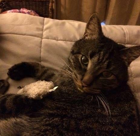 Missing Cat! (Colchester CT) hide this posting © craigslist