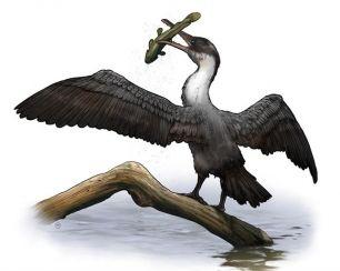 Un fósil de ave revela un Ártico cálido hace 90 millones de años