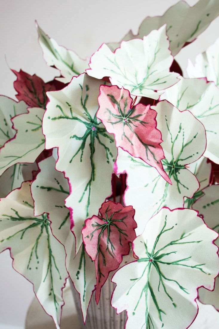 What S Next For Hogg I Currently Have A Long List Of Begonias I Want To Make And I Am Inspired By Things Like Ca Paper Plants Plants Pretty Plants