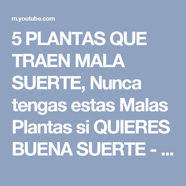 5 Plantas Que Traen Mala Suerte Nunca Tengas Estas Malas Plantas Si Quieres Buena Suerte Youtube Mala Suerte Suerte Buena Suerte