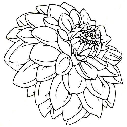 Dahlia Coloring Page Found Online In 2020 Flower Line Drawings
